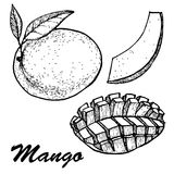 Hand drawn mango fruits set with leafs and mango slices and cubes. Botanical mango fruit illustration. Vector Royalty Free Stock Images