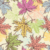 Hand drawn maple foliage seamless pattern Stock Photography