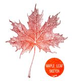 Hand drawn maple leaf Stock Photography