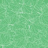 Hand Drawn Maple Leaf Seamless Pattern. Vector Stock Images