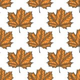 Hand Drawn Maple Leaf Seamless Pattern. Vector Royalty Free Stock Photography