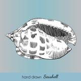 Hand drawn marine seashell. Vector illustration Stock Photo