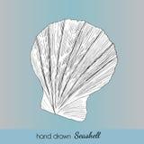 Hand drawn marine seashell. Vector illustration Stock Photography