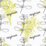 Hand drawn marjoram branch and handwritten sign Stock Images