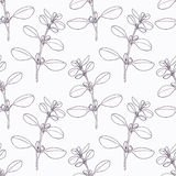 Hand drawn marjoram branch outline seamless Stock Image