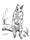 Hand drawn marmot Stock Photography