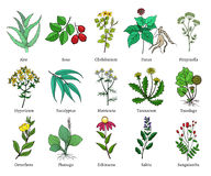 Hand drawn medical herbs and plants vector illustration on white royalty free illustration