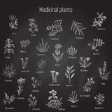 Hand drawn medical herbs and plants. Stock Images