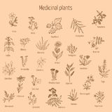 Hand drawn medical herbs and plants Stock Photos