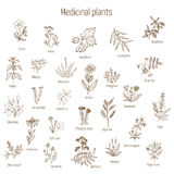 Hand drawn medical herbs and plants. Vintage collection of hand drawn medical herbs and plants. Vector illustration Royalty Free Stock Image