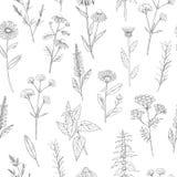 Hand drawn medicinal herbs. Vector pattern royalty free illustration