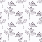 Hand drawn melissa branch outline seamless pattern Stock Images