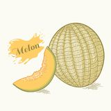 Hand drawn melon vector illustration Royalty Free Stock Photos