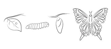 Metamorphosis. Hand drawn metamorphosis of a butterfly Stock Photography