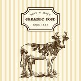Hand drawn milk Stock Photography