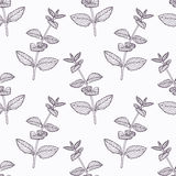 Hand drawn mint branch outline seamless pattern Stock Photos