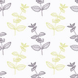 Hand drawn mint branch stylized Royalty Free Stock Images