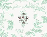 Hand Drawn Mint and Vanilla Vector Background Pattern. Abstract Spices Sketch Card or Cover Template with Classy Retro. Typography and Emblem. Isolated vector illustration