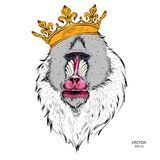 Hand Drawn monkey. Mandrill in a crown. Vector illustration of Ape. A Hand Drawn monkey. Mandrill in a crown. Vector illustration of Ape Royalty Free Stock Images