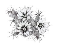 Hand drawn monochrome flowers isolated on white background. Hand drawn monochrome flowers isolated on white background Royalty Free Stock Photos