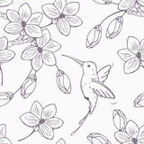 Hand drawn monochrome version of seamless pattern with humming bird colibri and flowers. In vector. Doodle style floral illustration with hummingbird Stock Photos