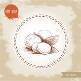 Hand drawn mozzarella cheese with basil leafs. Vector organic food illustration. Vintage design Stock Image
