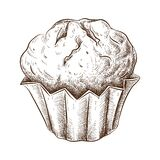 Hand drawn muffin isolated on white. Sketch of fresh baked muffin in vintage style. engraved pastry illustration. Sweet