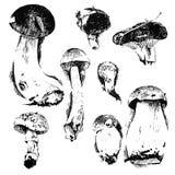 Hand drawn mushrooms Royalty Free Stock Photos