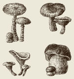 Hand drawn mushrooms Royalty Free Stock Photos