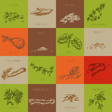Hand drawn natural spices. Natural spice icons. hand drawn vector design element set Royalty Free Stock Photo