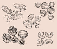 Hand Drawn Nuts Royalty Free Stock Photos