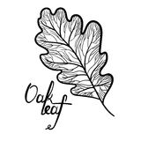 Hand drawn oak leaf with lettering isolated Stock Photos
