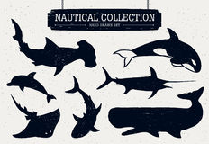 Hand drawn ocean fish icons set. Hand drawn nautical collection of fish and sea inhabitants on white background. Dolphin, white shark, killer whale, cachalot Royalty Free Stock Photos