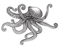 Hand drawn octopus in graphic ornate style. Stock Photos