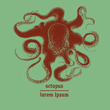Hand drawn octopus illustration. Royalty Free Stock Photo