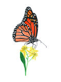Hand drawn oil pastel painting of orange monarch butterfly on yellow flowers, Danaus plexippus Stock Photos