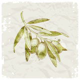 Hand drawn olive branch. On a vintage paper background Stock Photo