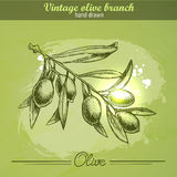 Hand drawn olive branch Royalty Free Stock Image