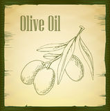 Hand drawn olive branch - vector Stock Photo