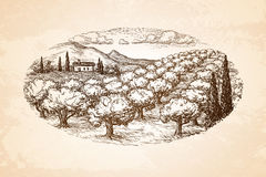 Hand drawn olive grove landscape. Royalty Free Stock Photography