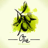 Hand drawn olive illustration with watercolor Stock Photography