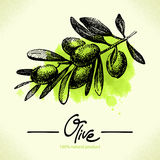 Hand drawn olive illustration with watercolor Royalty Free Stock Photography
