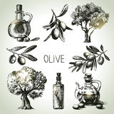 Hand drawn olive set Royalty Free Stock Photo