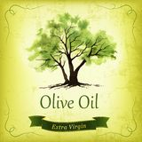 Hand drawn olive tree illustration with watercolor. Stock Photography