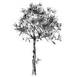 Hand drawn olive tree Royalty Free Stock Photo