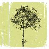Hand drawn olive tree Royalty Free Stock Photos