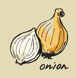 Hand drawn onion Royalty Free Stock Image