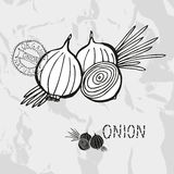 Hand drawn onions Stock Images