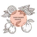 Hand drawn orange fruits Royalty Free Stock Photos