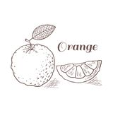 Hand drawn orange with leaf vector illustration Stock Photos